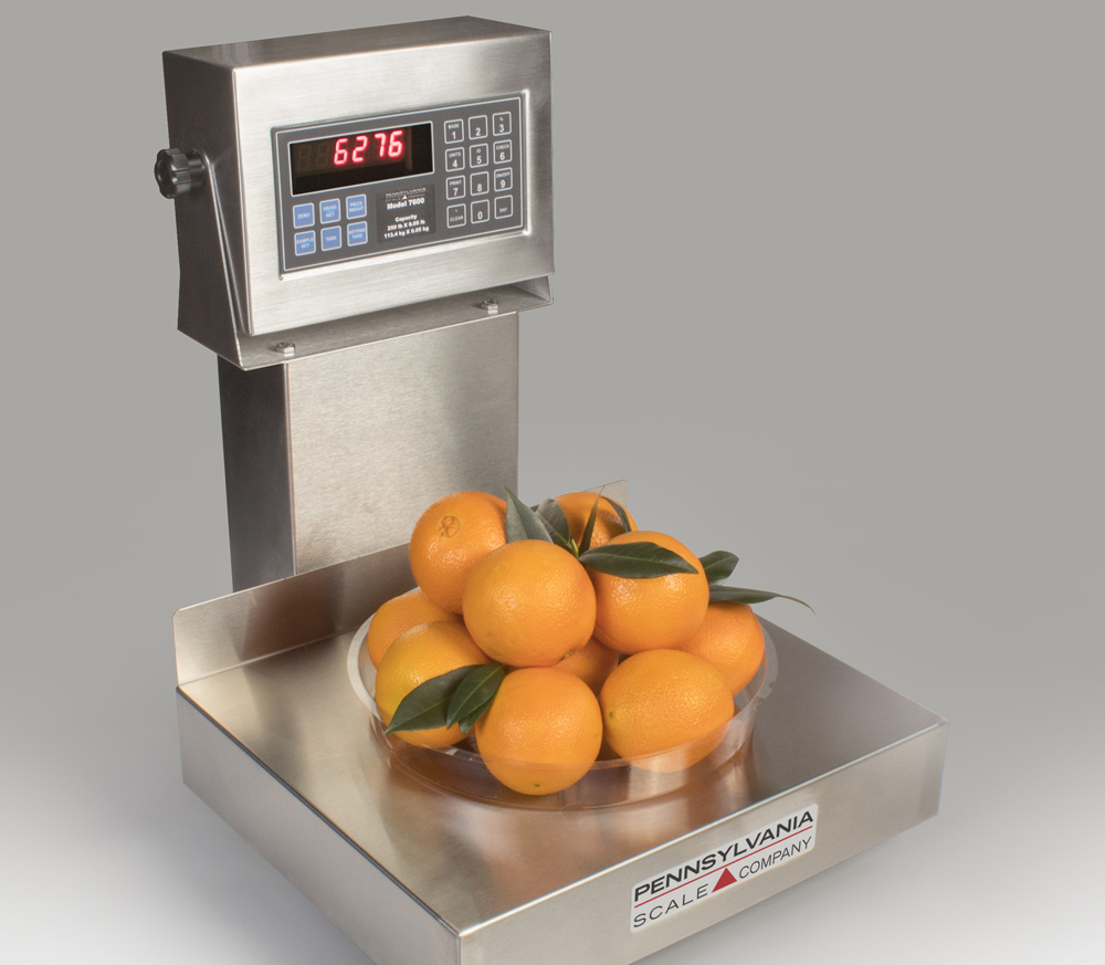 6200 Series Bench Scale