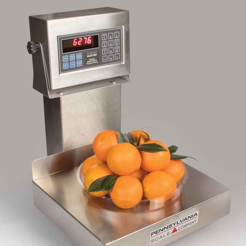 Rental Scales - 6200 Bench Scale